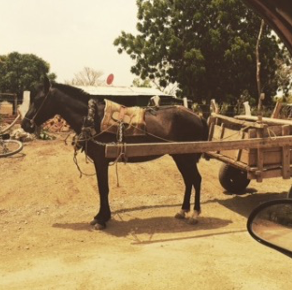 Donkey and cart in Nicaragua
